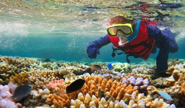 Great Barrier Reef Artenvielfalt